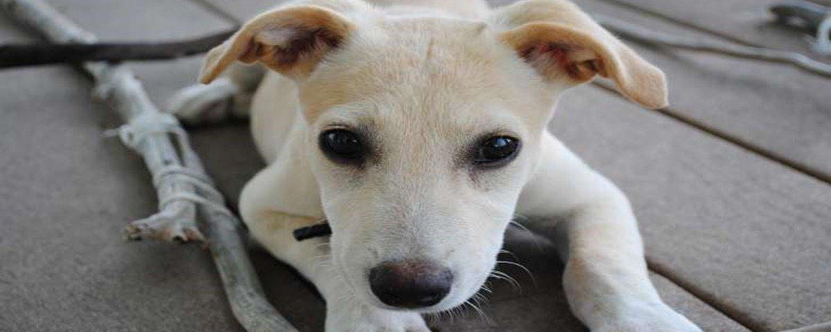 5 cachorros semisselvagens que você deve conhecer