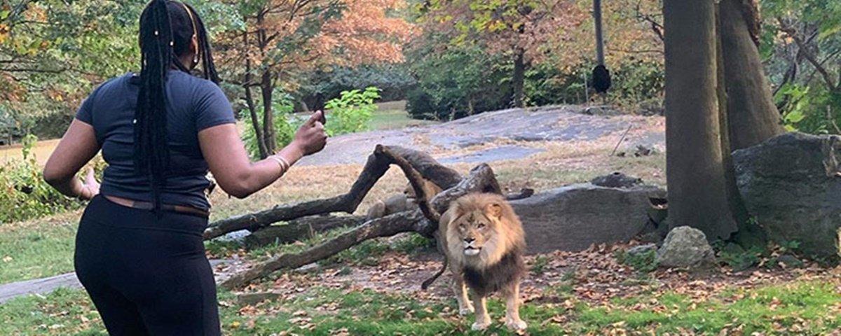 Mulher invade recinto de leão em zoológico de Nova York