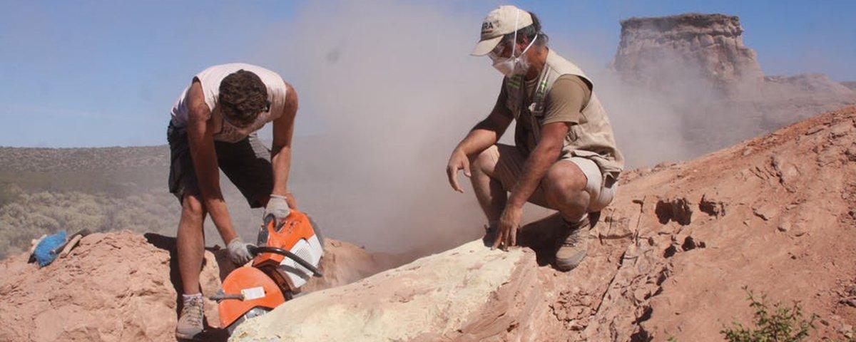 Expedição científica descobre fóssil de cobra com patas traseiras