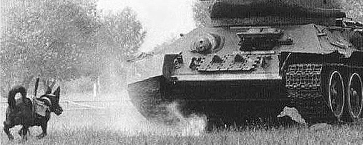 Antitanques: os cachorros-bomba sacrificados pela União Soviética
