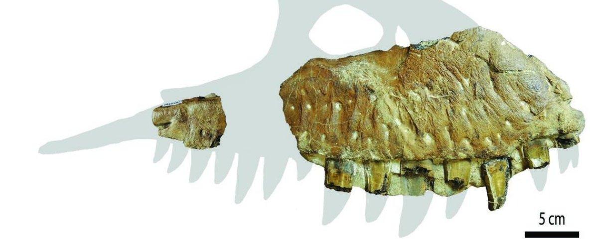 Uma nova espécie de tiranossauro é descoberta em Alberta