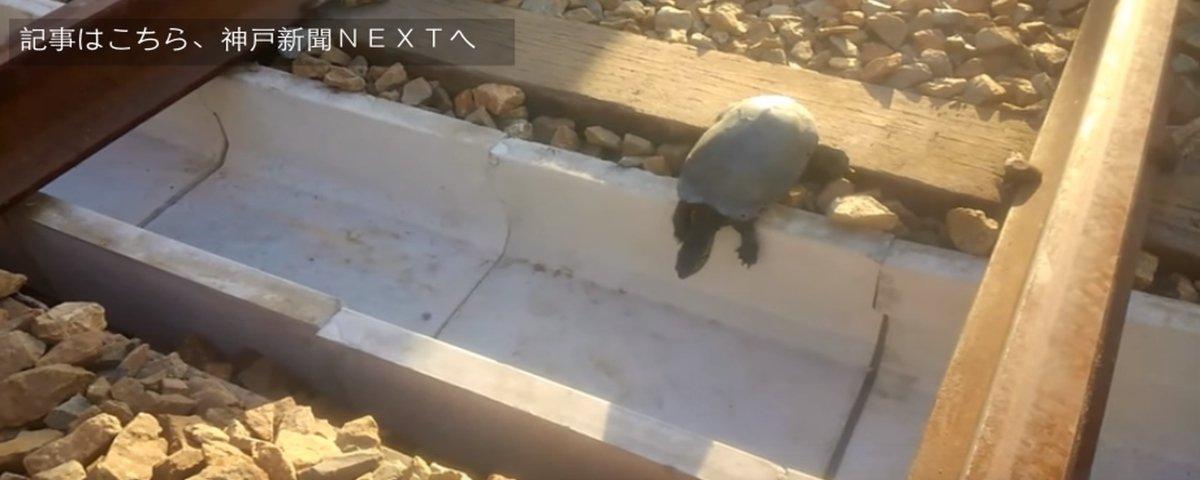 Japão cria diques para ajudar tartarugas a atravessar trilhos