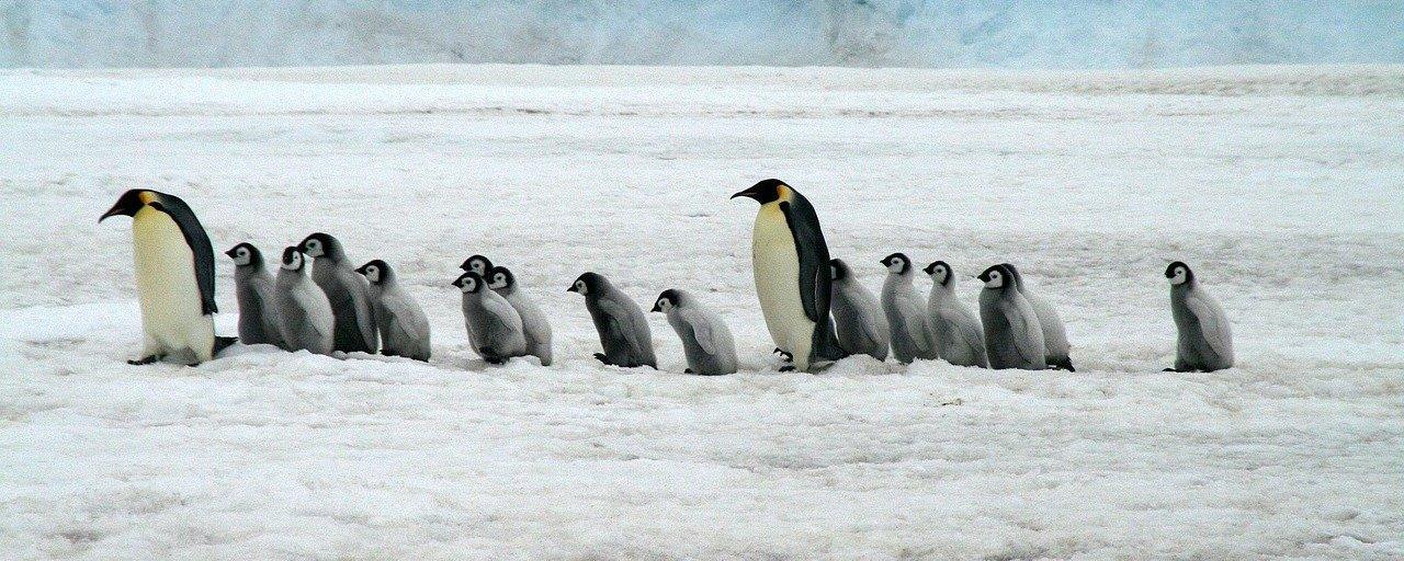 Diário de 1912 revela detalhes chocantes da vida sexual de pinguins