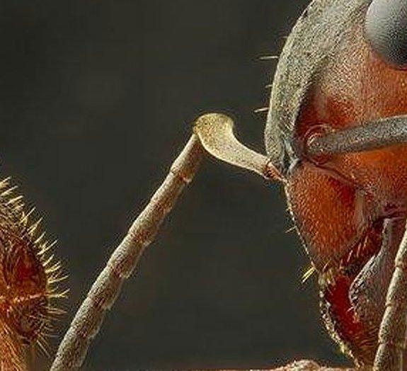 Coisas pequenas parecem gigantes (e impressionantes) em fotos microscópicas