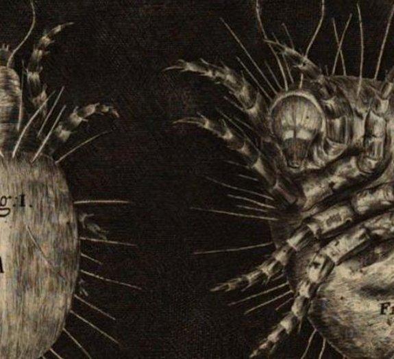 Livro do século 17 mostra como é o mundo microscópico