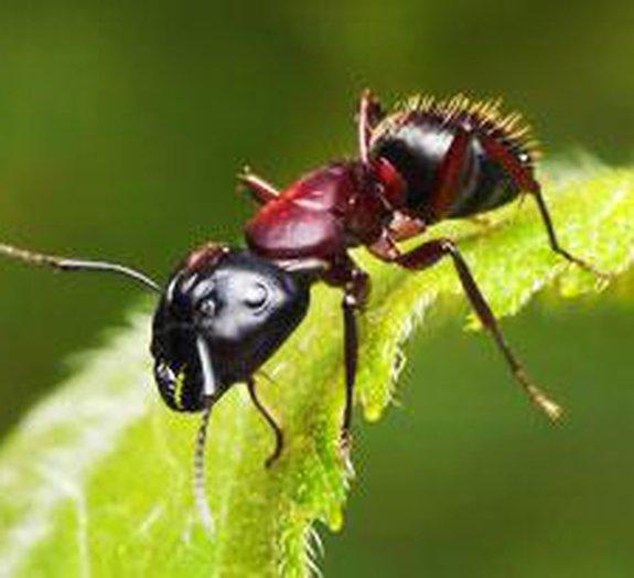 Vídeo mostra 5 anos na vida de uma colônia de formigas