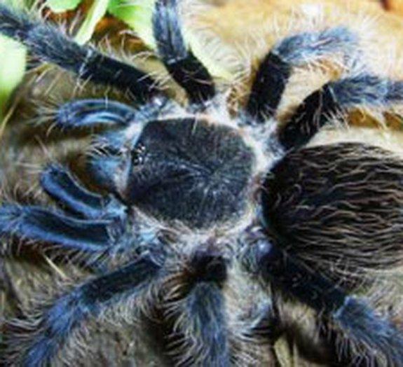 Aracnofobia: nova terapia promete acabar com o medo de aranhas
