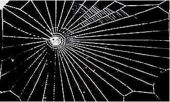 Aranha sob o efeito de LSD