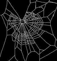 Aranha sob o efeito da maconha