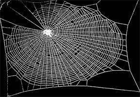 Teia produzida por aranha sóbria