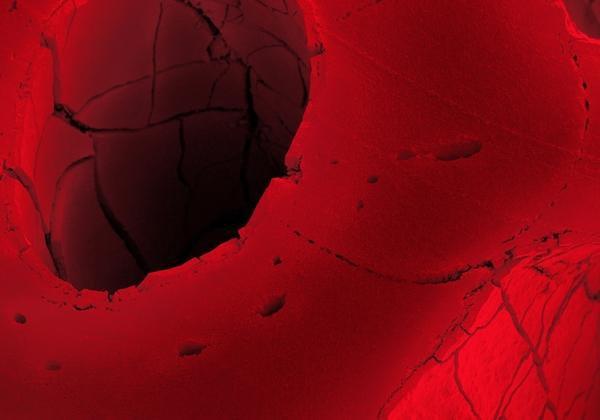 Alcaçuz vermelho