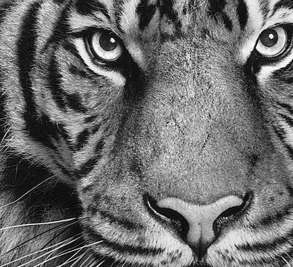 7 surpreendentes desenhos feitos com lápis