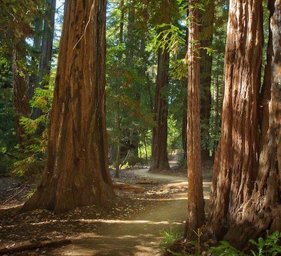 As 17 árvores milenares que estão entre as mais velhas da Terra