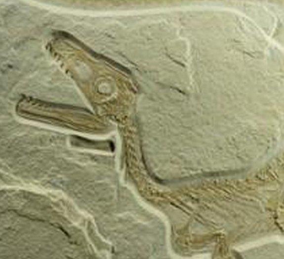 Paleontólogos sugerem que todos os dinossauros podem ter tido penas
