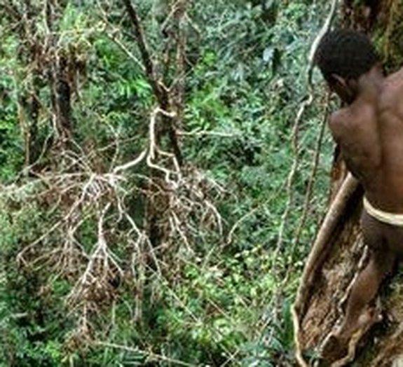 Tarzans da vida real: conheça a tribo que vive nas copas das árvores