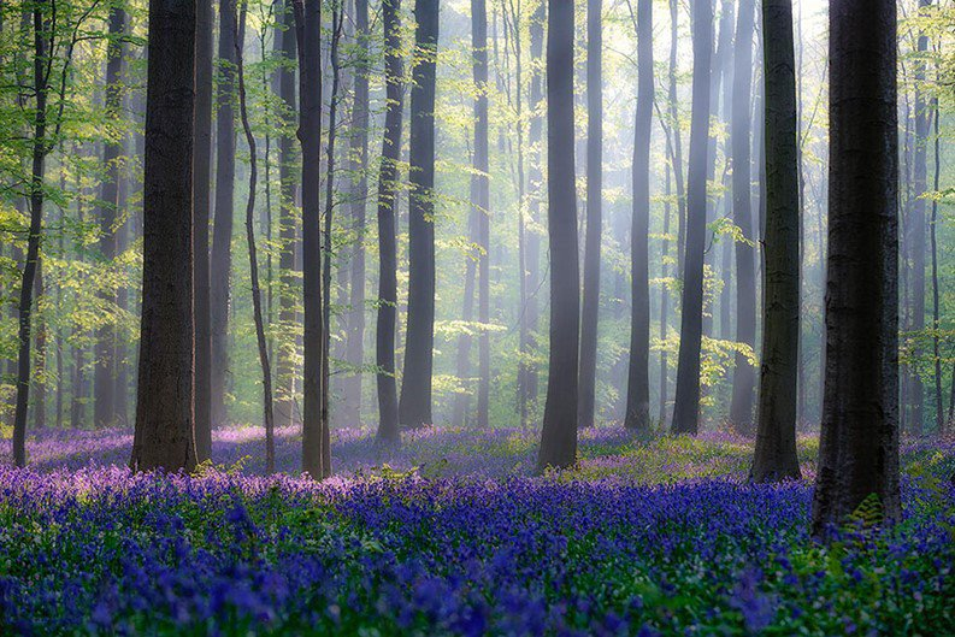 Esta floresta é o cenário perfeito para um conto de fadas
