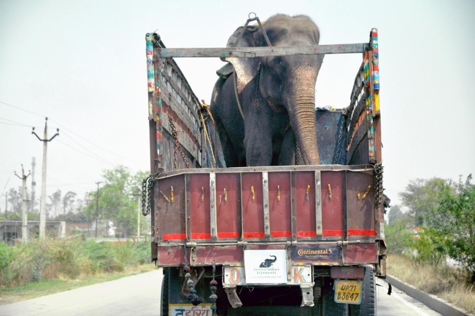 Elefante chora de emoção ao ser libertado depois de passar 50 anos preso