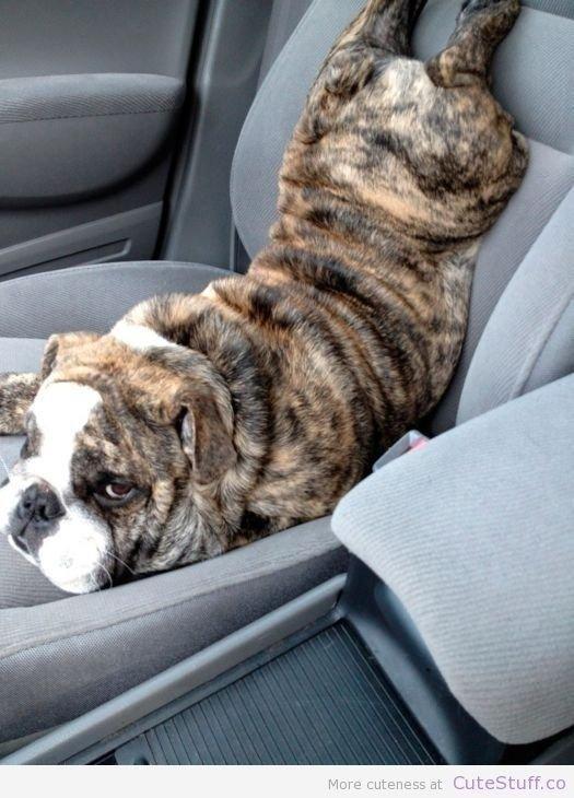 Estas 17 fotos de cães sentados de forma engraçada vão melhorar seu dia