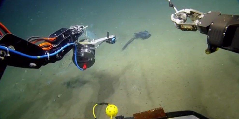 """Tente adivinhar o que é esta """"coisa"""" estranha encontrada no Golfo do México - Mega Curioso"""