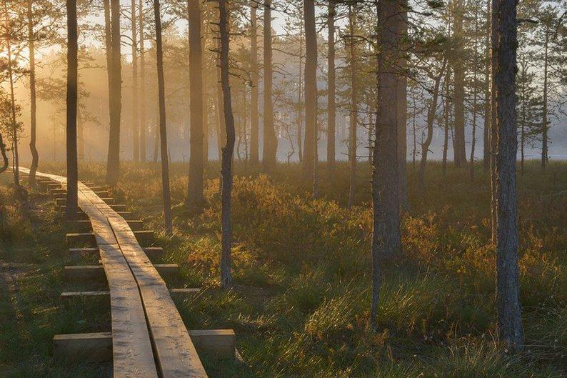 Parque Nacional de Laheema