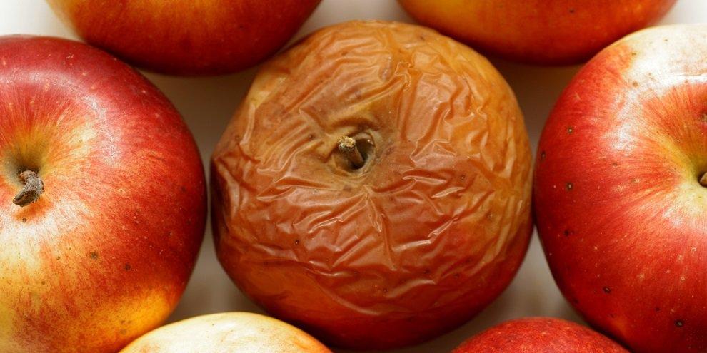 Resultado de imagem para frutas estragadas