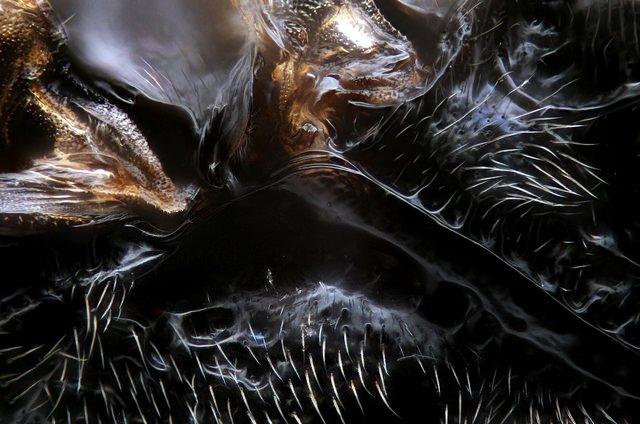 Da família Braconidae. Local onde a asa se une ao corpo.
