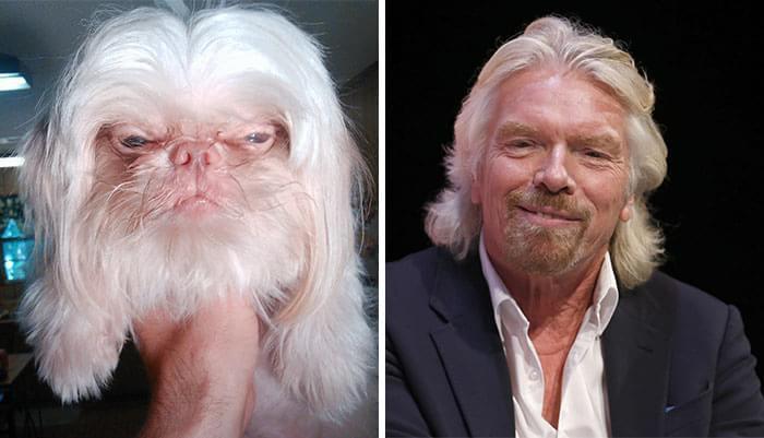 Cachorro e o empresário Richard Branson