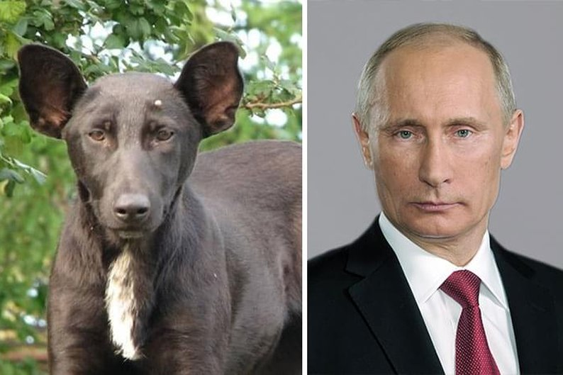 Cachorro e Vladimir Putin