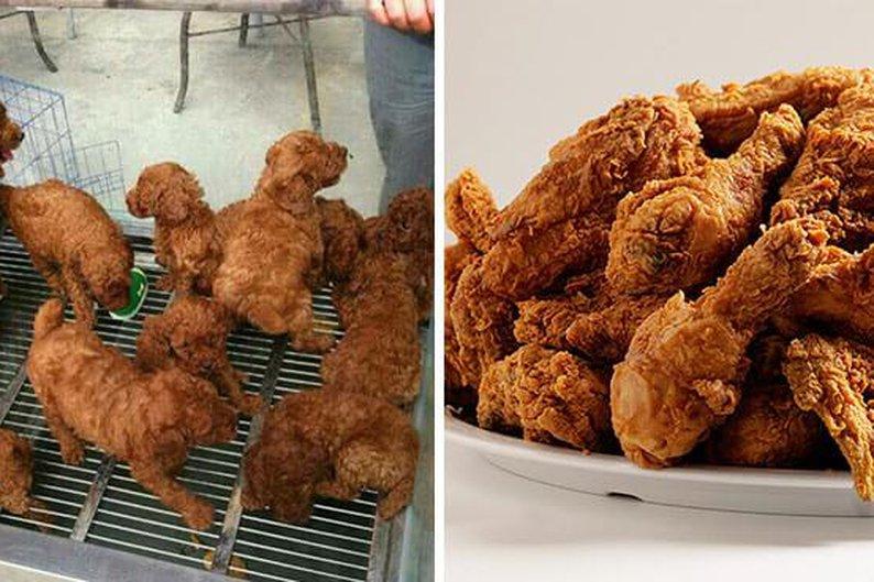 Monte de filhotes de cachorro e monte de frango frito