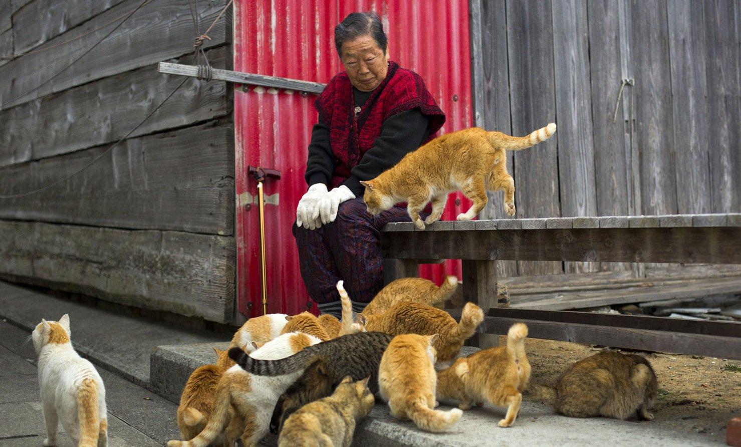 Os bichanos dominam: conheça a ilha japonesa invadida por gatos