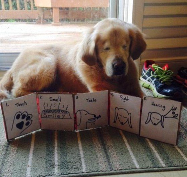 A incrível história do cachorro sem olhos que se tornou um cão terapeuta