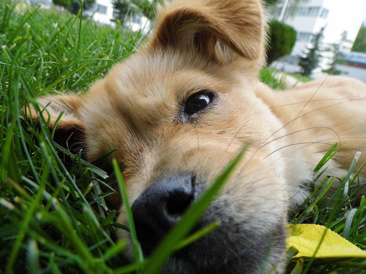 Ciência comprova que olhar para seu cãozinho faz você sentir amor
