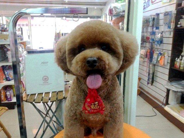 Nova moda em Taiwan é tosar os bichinhos com formas geométricas
