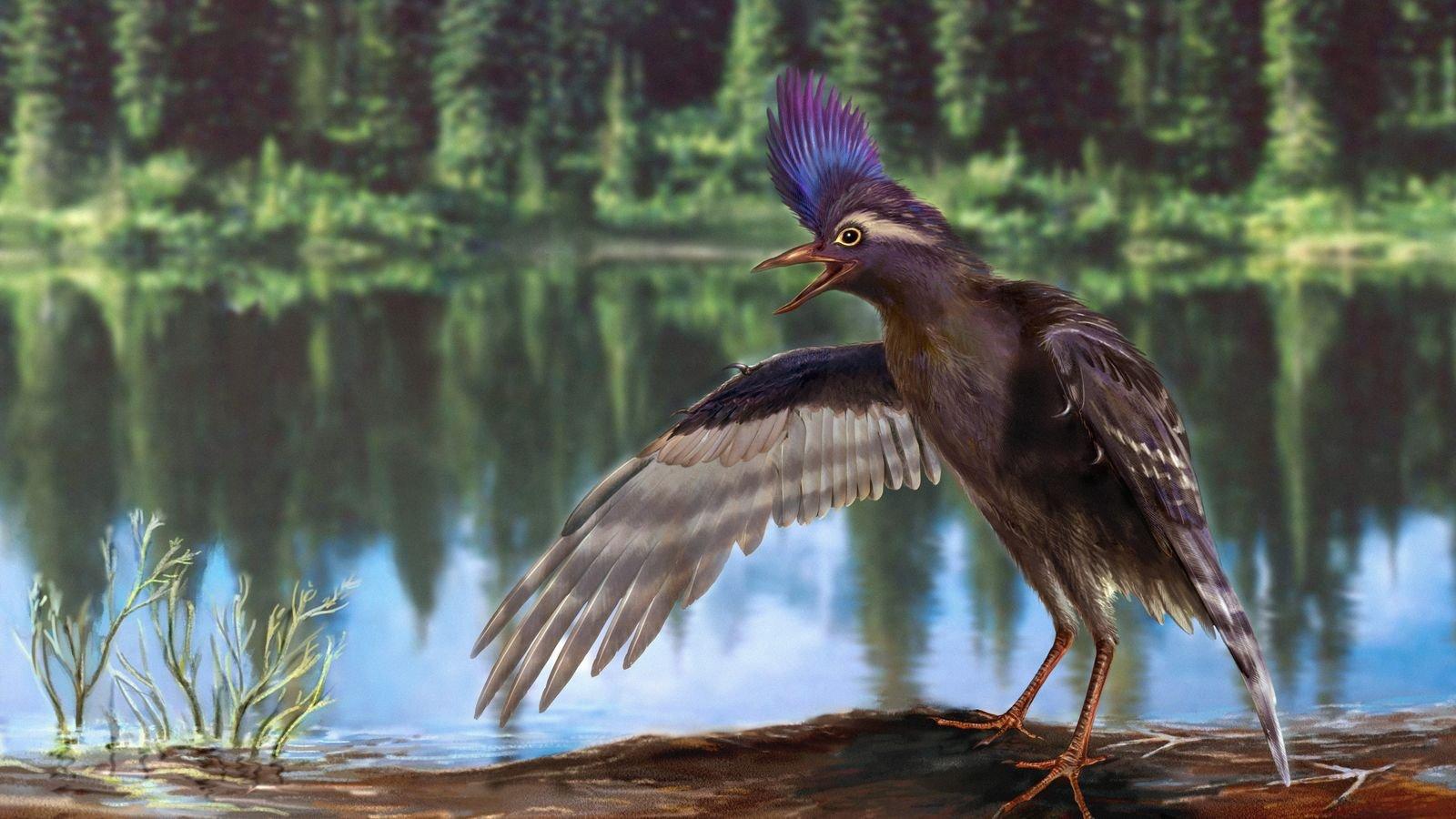 Ave com jeito de punk é o ancestral mais antigo dos pássaros modernos