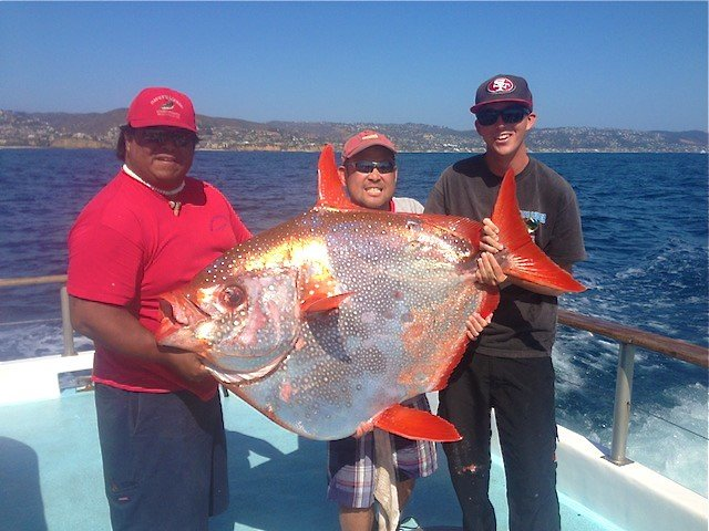 Pesquisadores descobrem o primeiro peixe de sangue quente