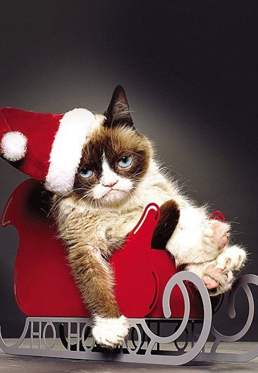Grumpy Cat -Daily Mail