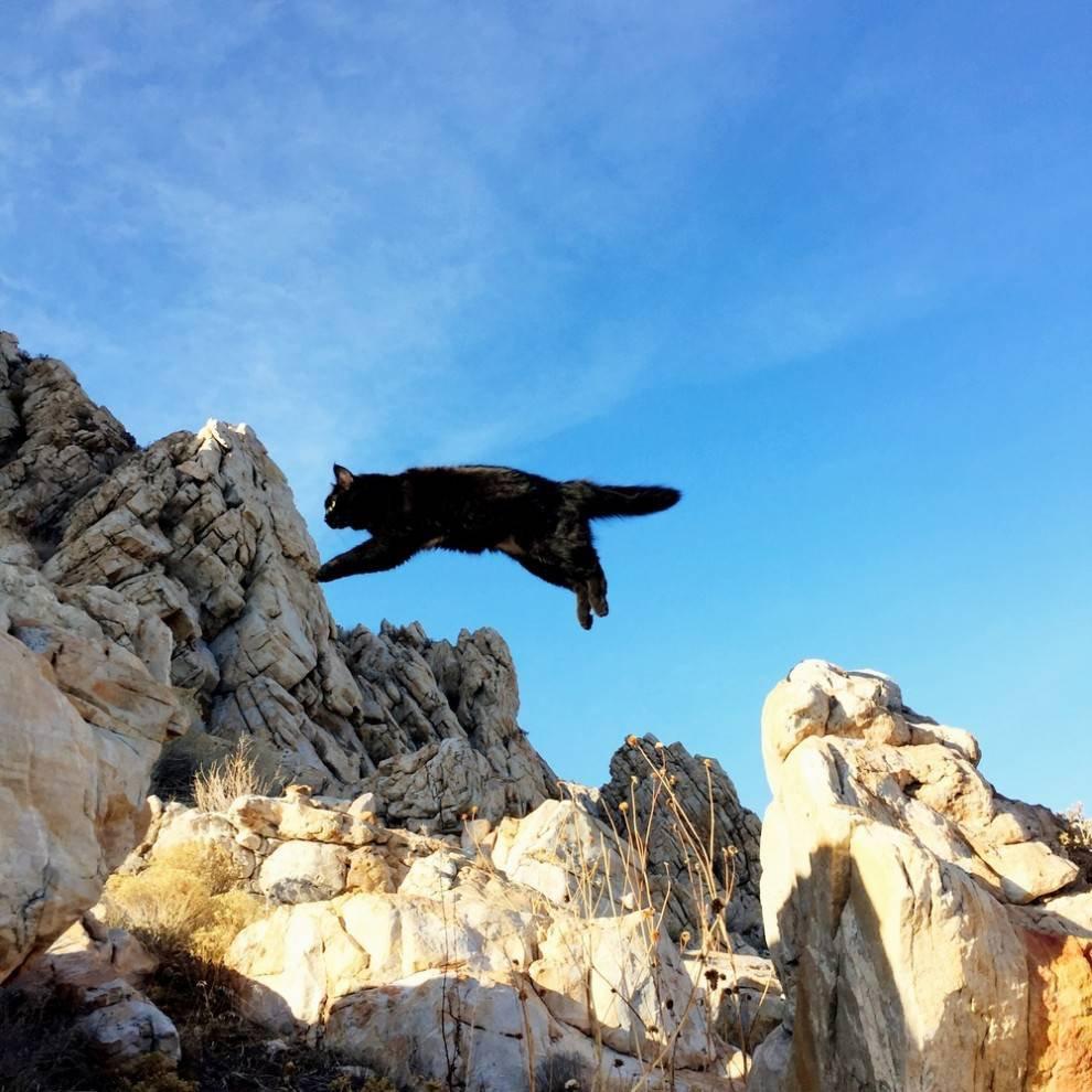 Conheça Millie, a gata alpinista [galeria]