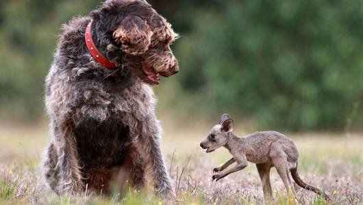 Você sabia que os animais também adotam outros bichinhos?