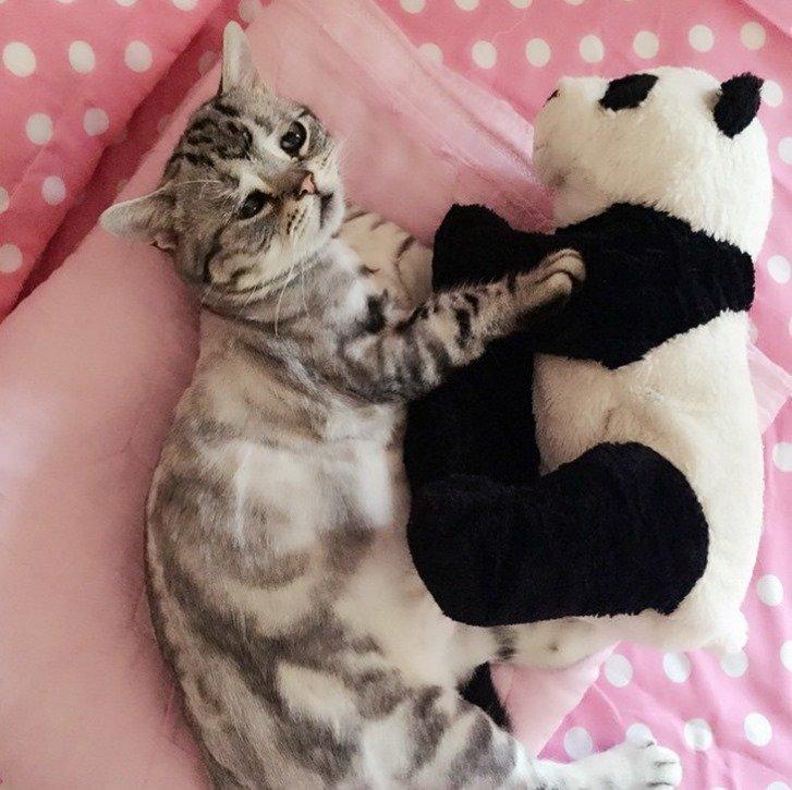 Conheça Luhu, provavelmente a gatinha mais triste da internet [galeria]