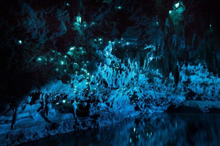 Vermes brilhantes transformam teto de cavernas em cenário de outro mundo
