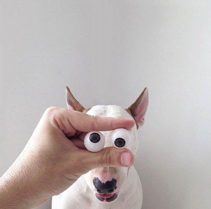 Ilustrador brasileiro faz série de fotos divertidas com cão