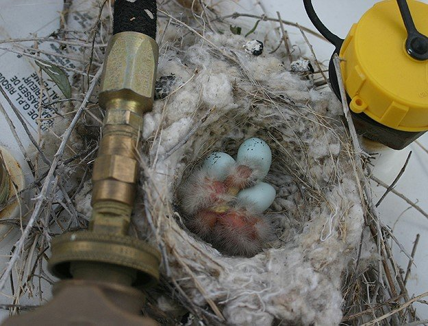 Arquitetos da natureza: 25 ninhos feitos em lugares inusitados