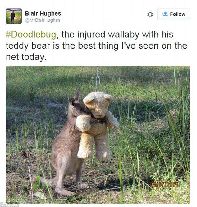 Quebrando a internet com fofura: o canguru e seu ursinho