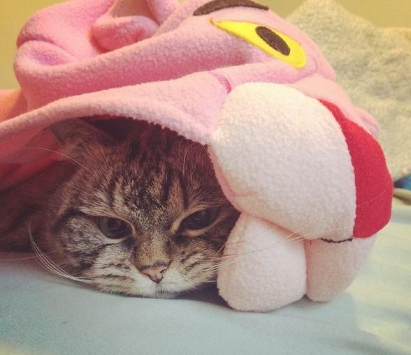 Gostaram do meu cobertor da Pantera Cor-de-Rosa?