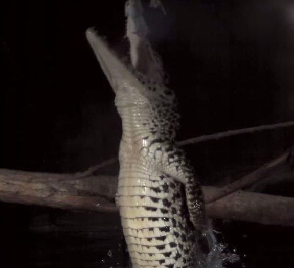 Confira imagens de predadores atacando suas presas em câmera superlenta