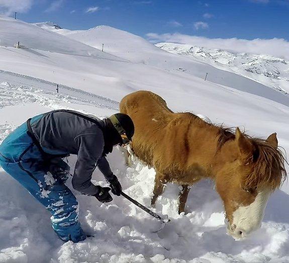 Com GoPro, jovem registra resgate emocionante de cavalo nas montanhas