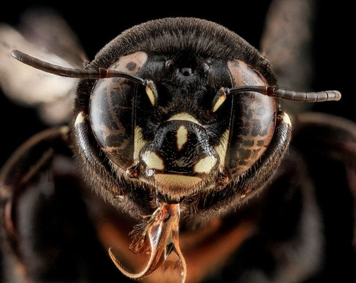 As fotos mais incríveis de insetos em close-up que você já viu