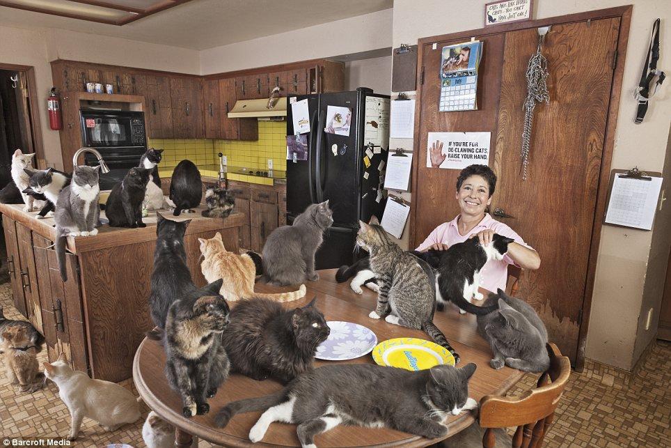 Conheça a mulher que vive com mais de 1.000 gatos [vídeo]