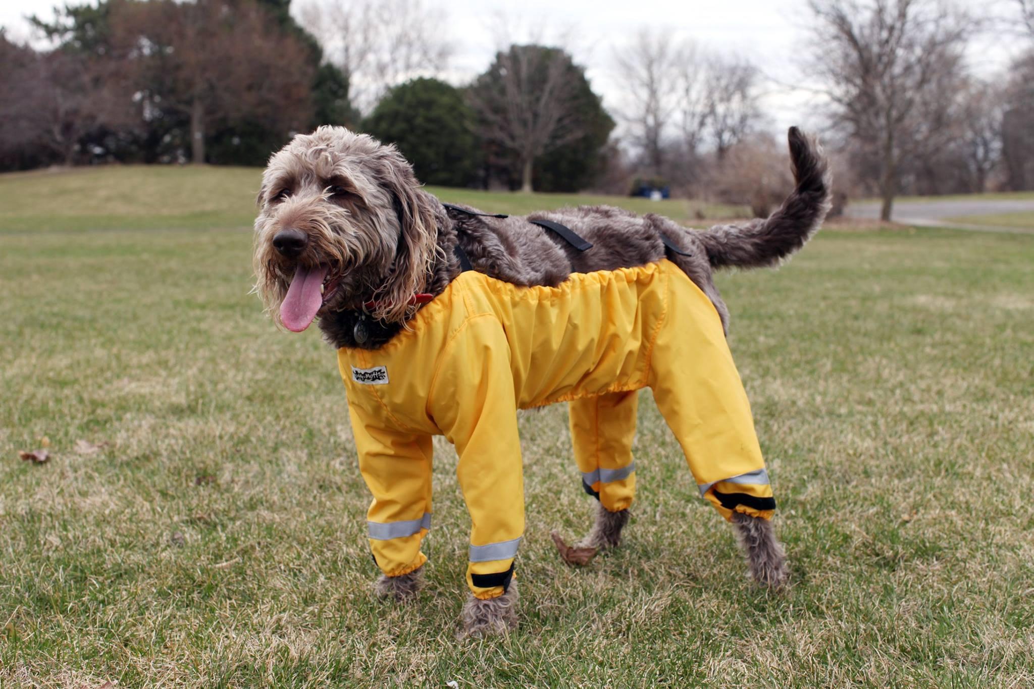 Chega de discutir: calças para cães já estão à venda