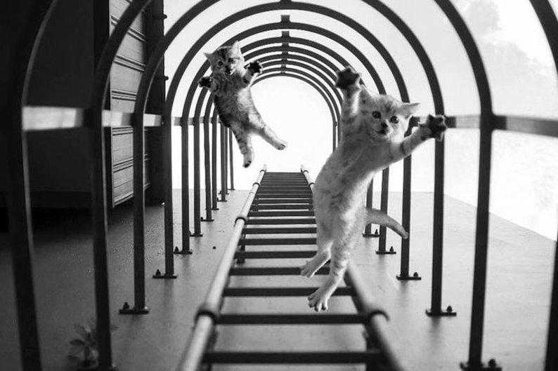 Yu Wei tirou a foto das escadas e não esperava registrar gatinhos voadores